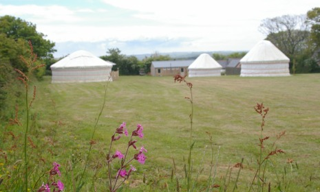 Yurts in the field